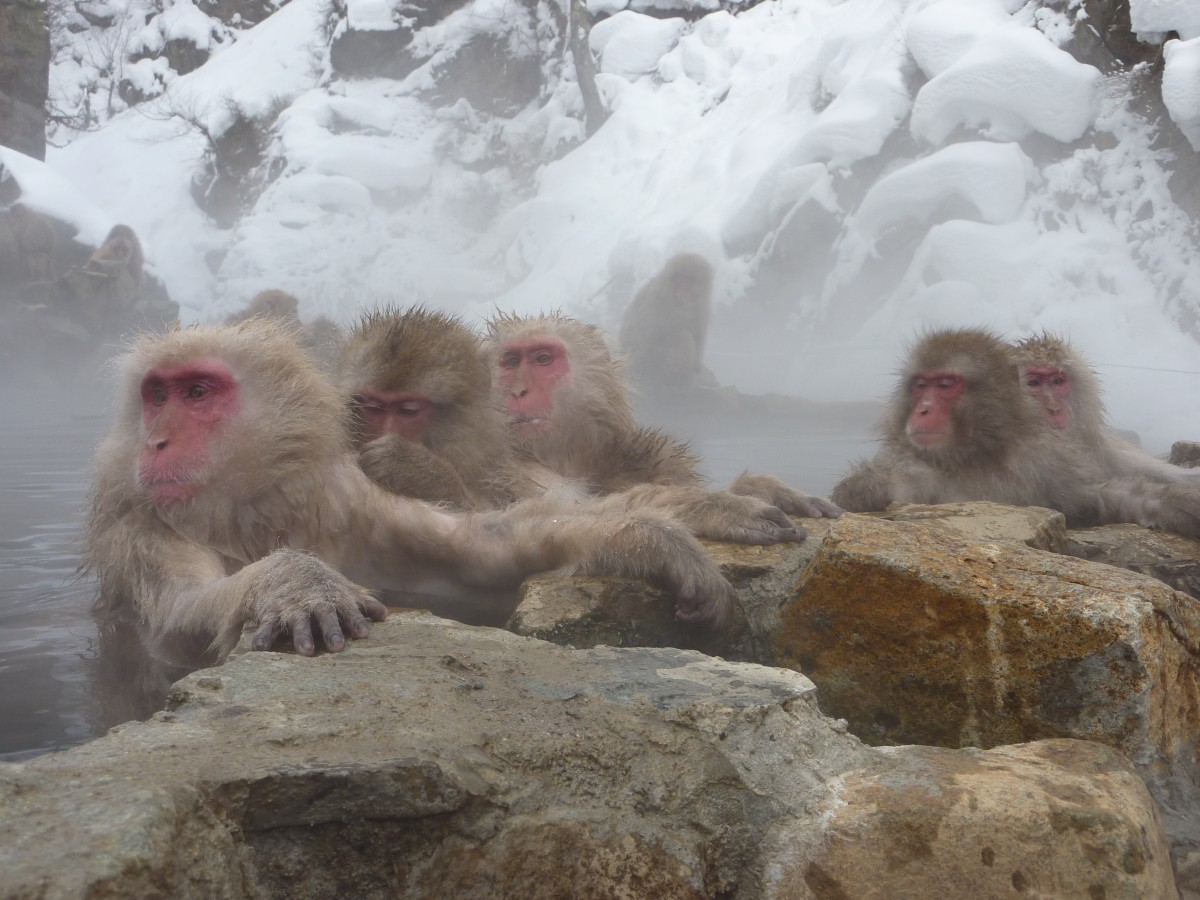 how to get to snow monkeys from tokyo