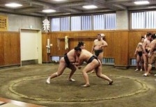 Sumo Training Tour