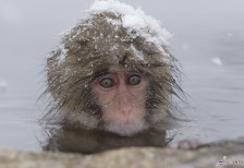 Snow Monkey and Zenkoji Temple 1 Day Tour