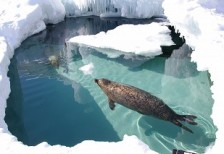Asahikawa Zoo Winter One-Day Tour