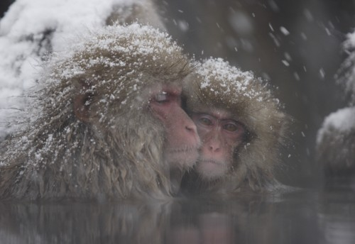 Snow Monkey Tour from Tokyo with Lunch